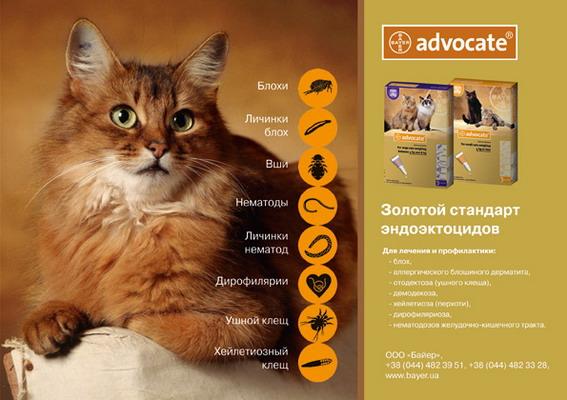 адвокат от паразитов для кошек отзывы