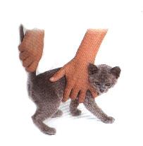 http://rolandus.org/images/tutorial/foto_1.5.7.jpg