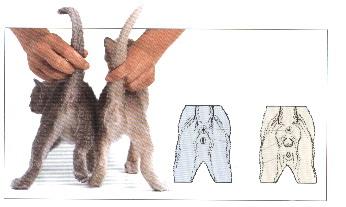 determine my cats sex